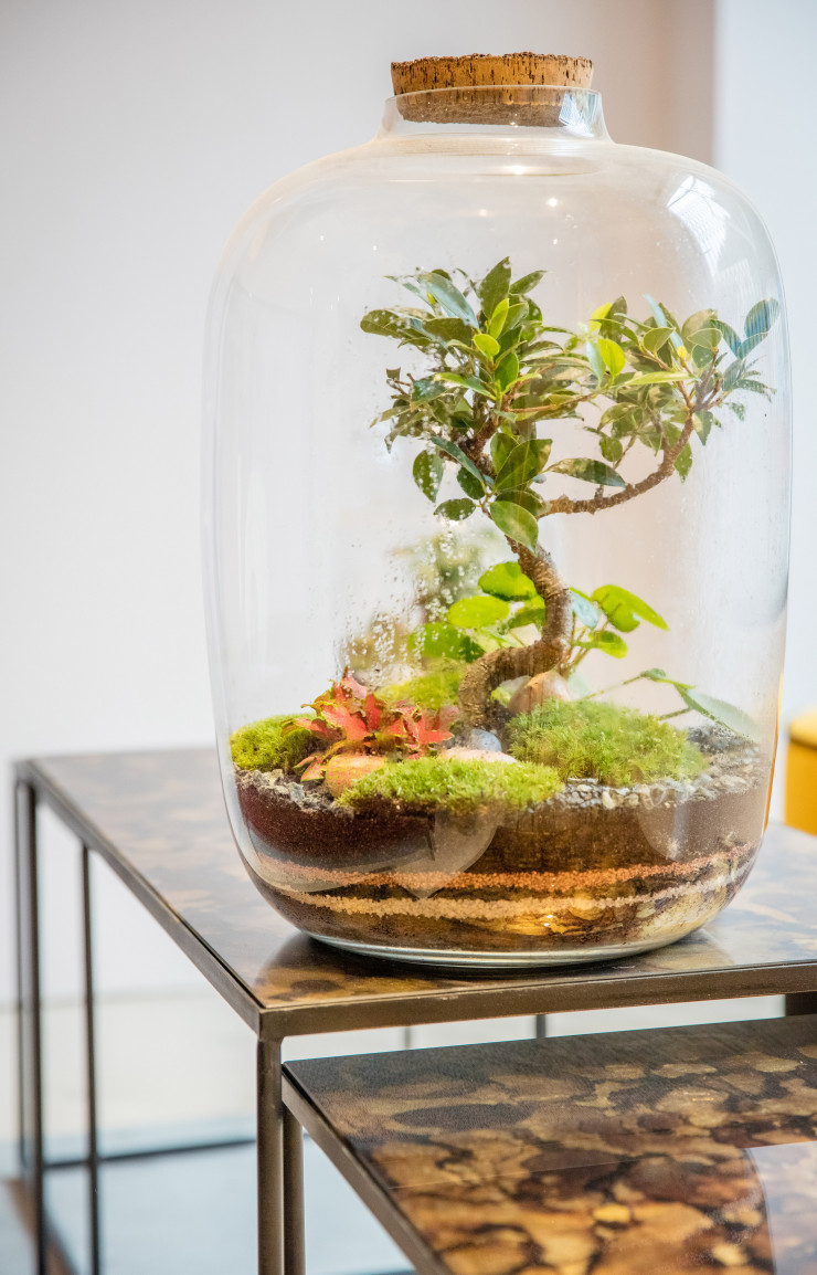 Terrarium Green Factory.